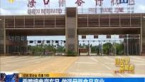 自貿港奮楫者 乘跨境電商東風 做強母嬰食品產業