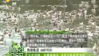 东方东河镇:发展养殖业 决战决胜脱贫攻坚