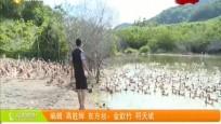 奋斗小康路 东方:发展特色养殖业 带动村集体经济