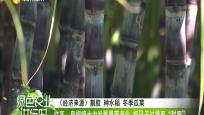 """临高:皇桐镇大力发展果蔗产业 把日子过得更""""甜蜜"""""""