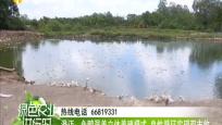 澄迈:鱼鸭混养立体养殖模式 良性循环实现双丰收