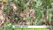 定安黄竹镇:水源污染步步紧逼 农户私建土坝截流养殖
