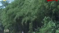 白沙七坊镇:小竹子长出大产业