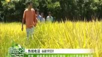 《绿色农业进行时》 2020年08月15日