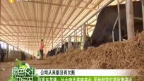 临高东英镇:壮大肉牛养殖产业 因地制宜打造致富产业