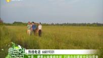 文昌:撂荒土地重焕生机 引进企业提高农田利用率