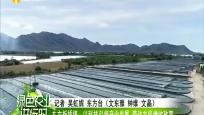 东方板桥镇:以科技引领产业发展 带动农民增收致富