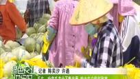 乐东:哈密瓜产业不断发展 助力农户脱贫致富