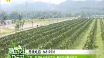 大力发展农村市场主体 壮大农村集体经济