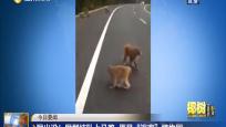 """猴出没!猴群结队上马路 原是""""逃离""""植物园"""
