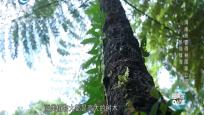 热岛绿海——海南热带雨林国家公园