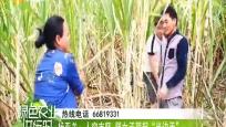 """杨亚关:人穷志坚 弱女子顶起""""半边天"""""""