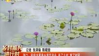 海口:积极发展香水莲花产业 美了乡村 富了村民
