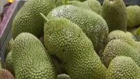 琼海:榴莲蜜上市引热销 村企合作共同发展特色产业