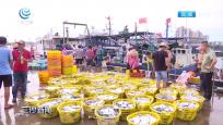 潭門迎來開漁季大豐收