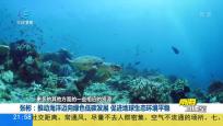 筑牢海洋生態屏障 推動海洋綠色發展