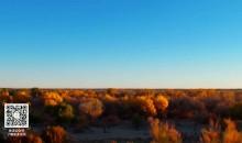 我们站立的地方 第2集 石旭峰:磐石立大漠