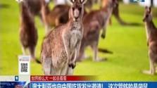 澳大利亚也向中国吃货发出邀请!这次管够的是袋鼠
