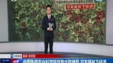 中国热带农业科学院培育出玫瑰茄 可发展林下经济