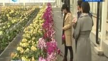 桂林洋国家热带农业公园开业