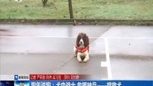狗年说狗:犬中战士 救援神兵——搜救犬