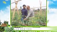 文昌:掌握圣女果栽培技术 土壤水肥很关键