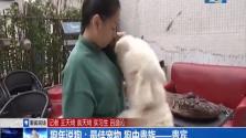 狗年说狗:最佳宠物 狗种贵族——贵宾