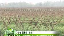 《绿色农业进行时》2018年02月24日