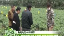 澄迈:防控辣椒常见病害 利用绿色防控技术控制虫害数量