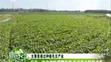 《绿色农业进行时》2018年3月9日