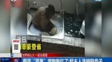 """南非""""贤惠""""宠物猴红了:帮主人洗碗刷盘子"""