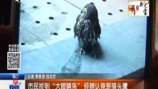 """市民捡到""""大眼睛鸟""""  经辨认是猫头鹰"""