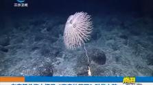 """在麦哲伦海山探寻""""海底的花园""""科学之谜"""