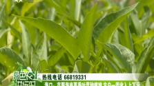 海口:克服海南夏季叶菜种植难 农户一茬收入上万元