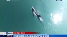 洋浦海域现鲸鱼 网友手机拍戏水画面