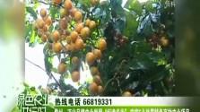 """儋州:迈出品牌农业发展""""标准步伐"""" 实施5个热带特色高效农业项目"""