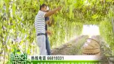 屯昌:多雨季及时排水防烂根 排水沟深度在30公分