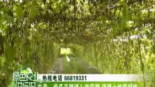 屯昌:苦瓜采摘进入收尾期 调理土地酸碱性