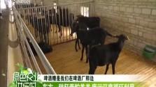 东方:秸秆青贮养羊 废污深度循环利用