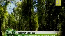 """琼中:""""绿化宝岛""""进行时 林木种植生效益"""