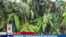 海南将建一批热带作物技术试验示范项目