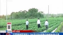 三亚崖州区投入200万元补贫困户种植冬季瓜菜