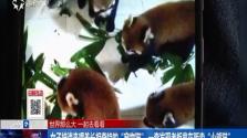 """女子被请来喂养长相奇特的""""宠物猫"""" 一查发现老板竟在贩卖""""小熊猫"""""""