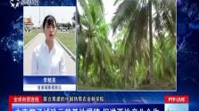 全球自贸连线:中柬椰子试验示范基地揭牌 促进两地产业合作