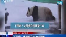 下雪啦!大熊猫在雪地里撒欢