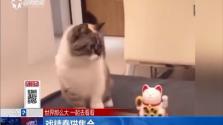 戏精蠢猫集合
