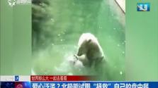 """爱心泛滥?北极熊试图""""拯救""""自己的盘中餐"""