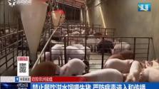 禁止餐饮泔水饲喂生猪 严防病毒进入和传播