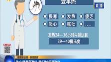 海南通报登革热疫情:77例已隔离治疗 病情稳定
