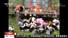 中国大熊猫保护研究中心 圈养大熊猫种群数量突破310只